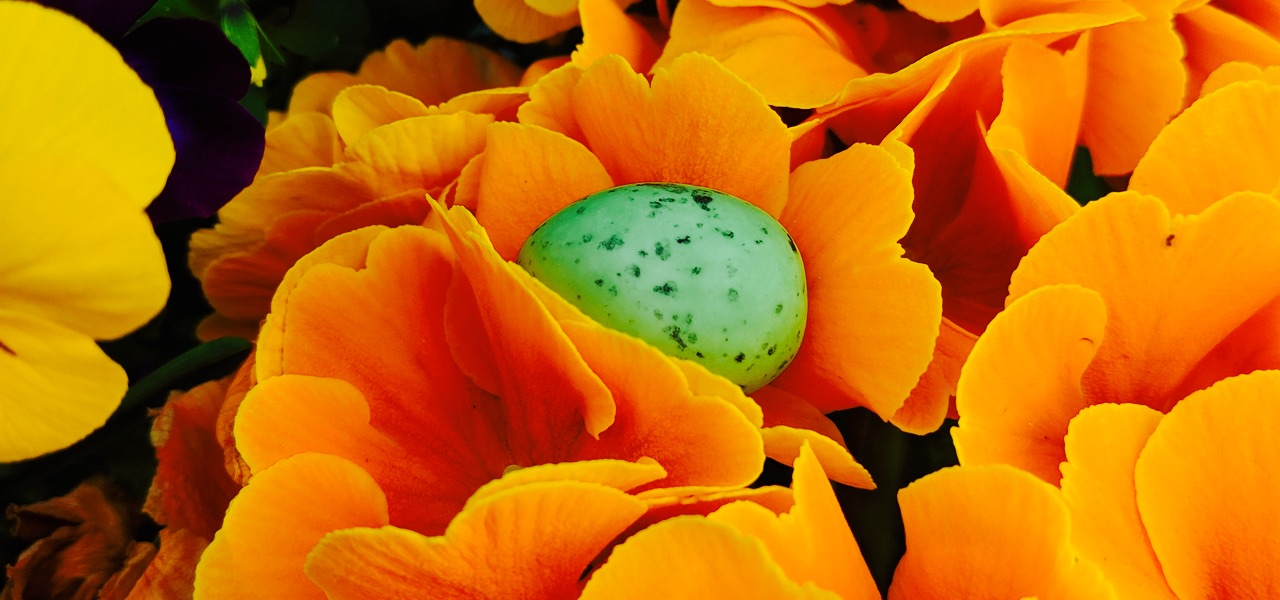 Alle lieben Ostereier